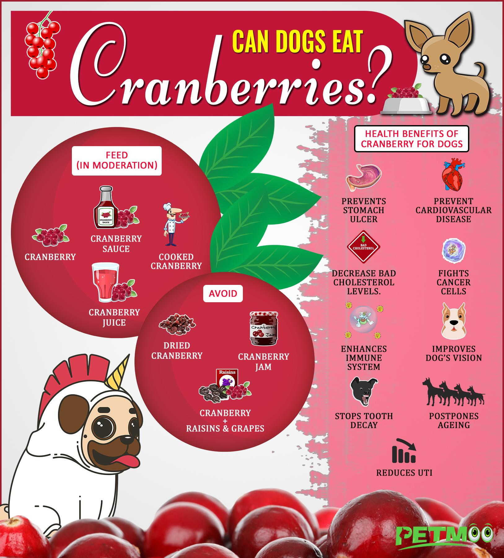 Are Cranberries Safe For Dogs Infographic