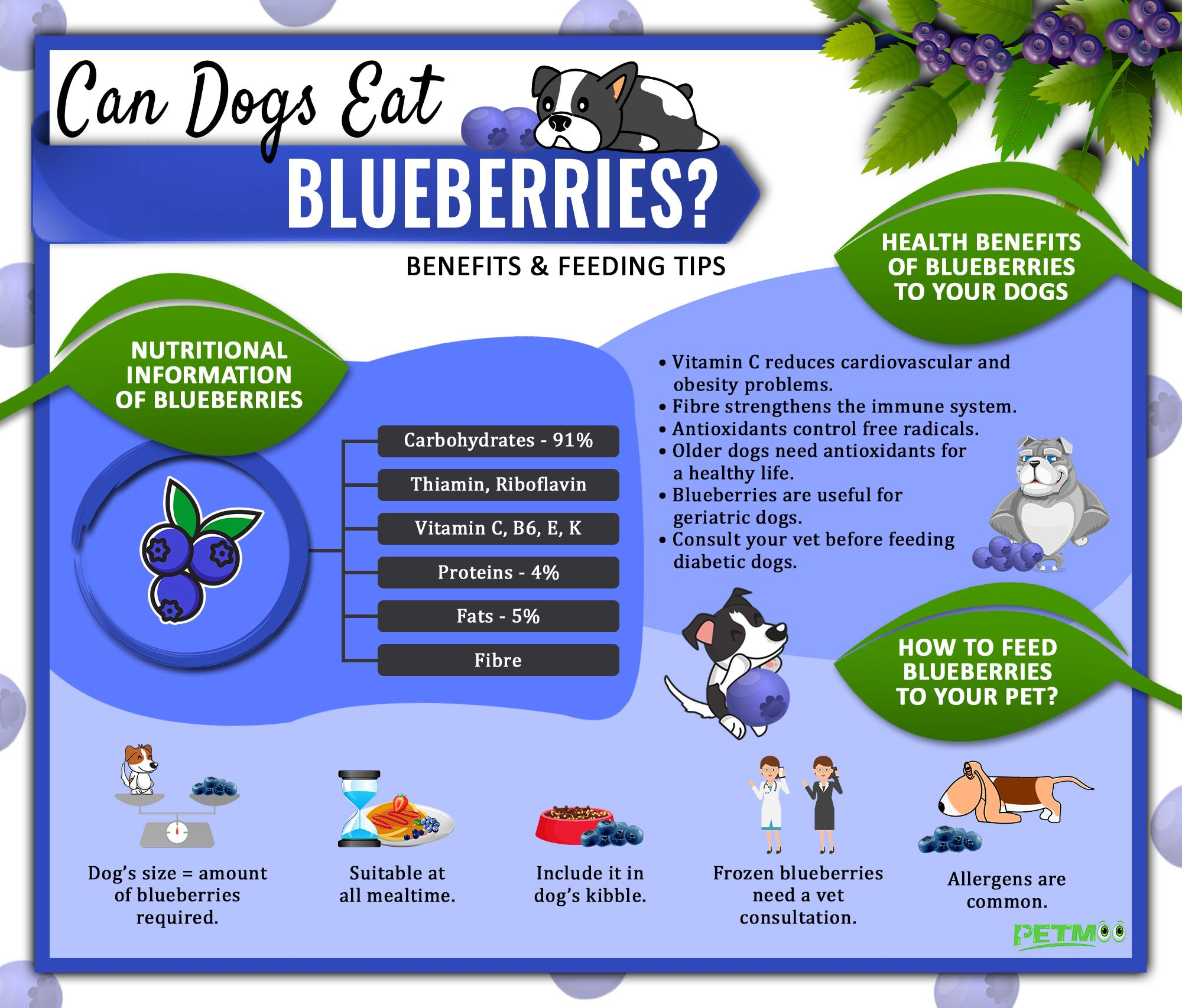 Can Dogs Eat Blueberries Infographic