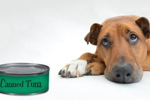 Can Dogs Eat Canned Tuna