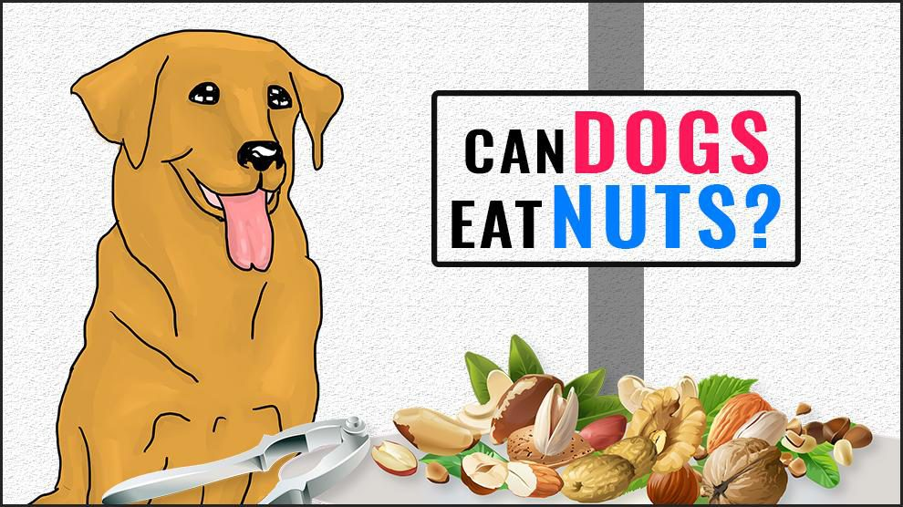 Can Dogs Eat Nuts