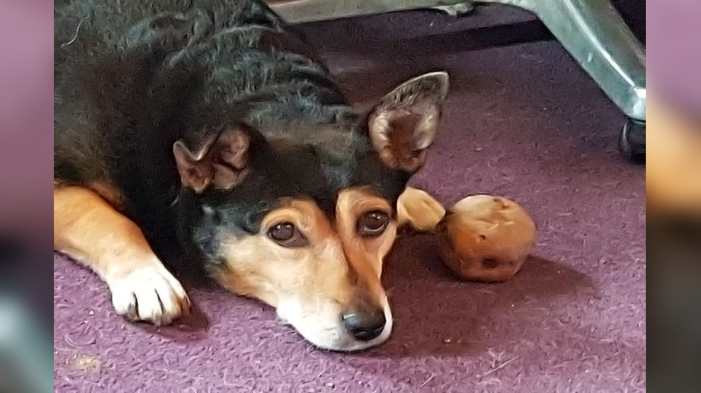 Can Dogs Eat Potato Skins