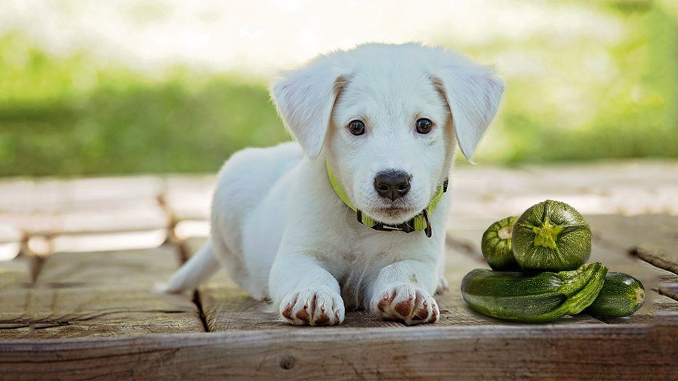 Can Dogs Eat Zucchini