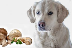Can Dogs Eat Mushrooms?