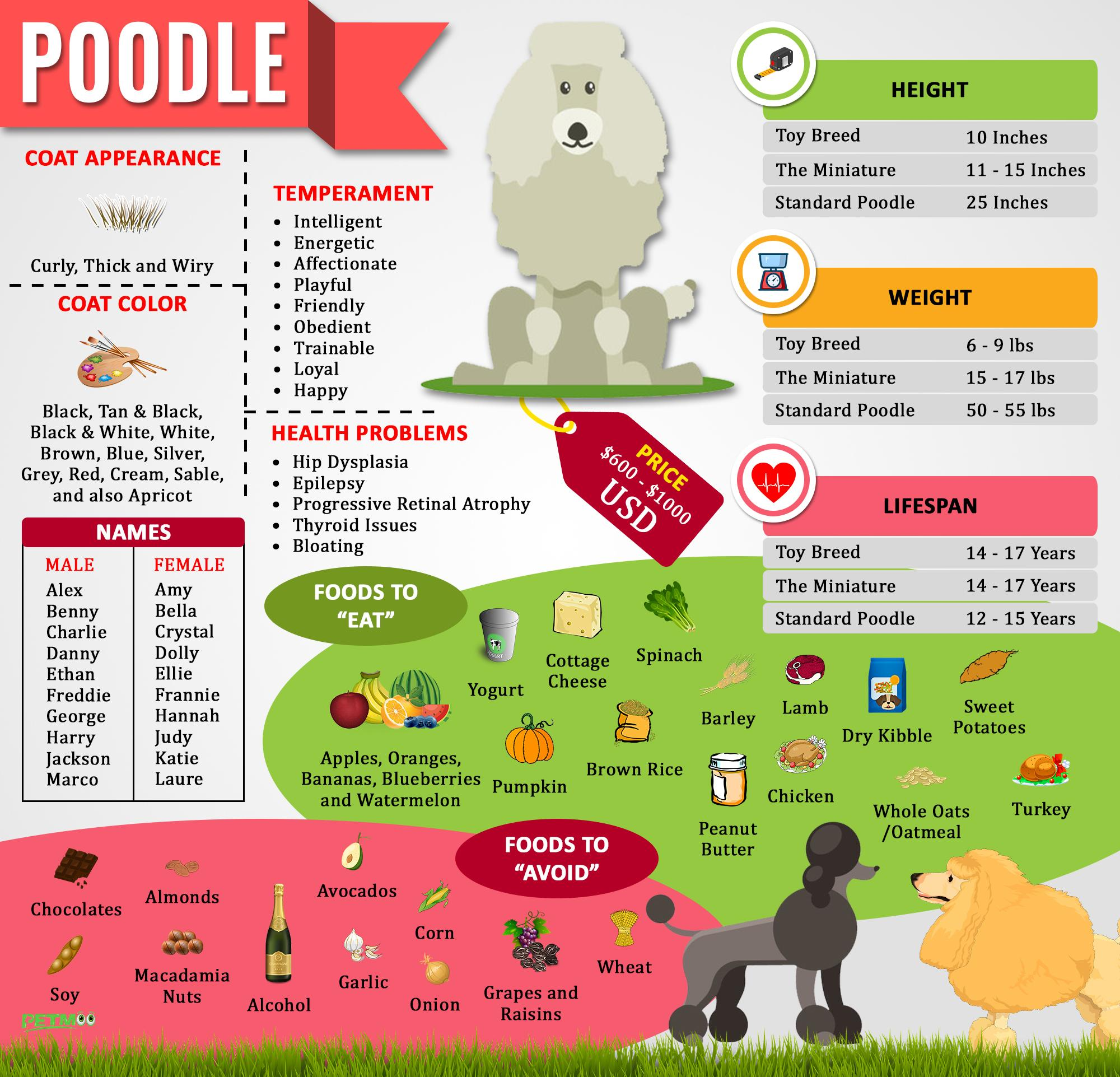 Poodle Infographic