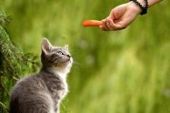 Can Cats Eat Carrots