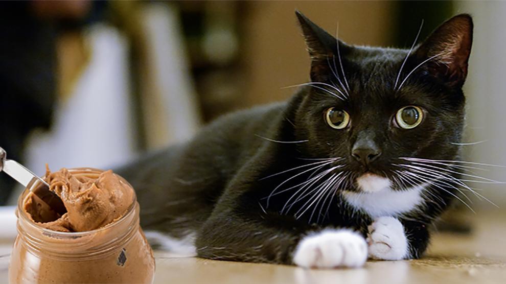 cat diary video