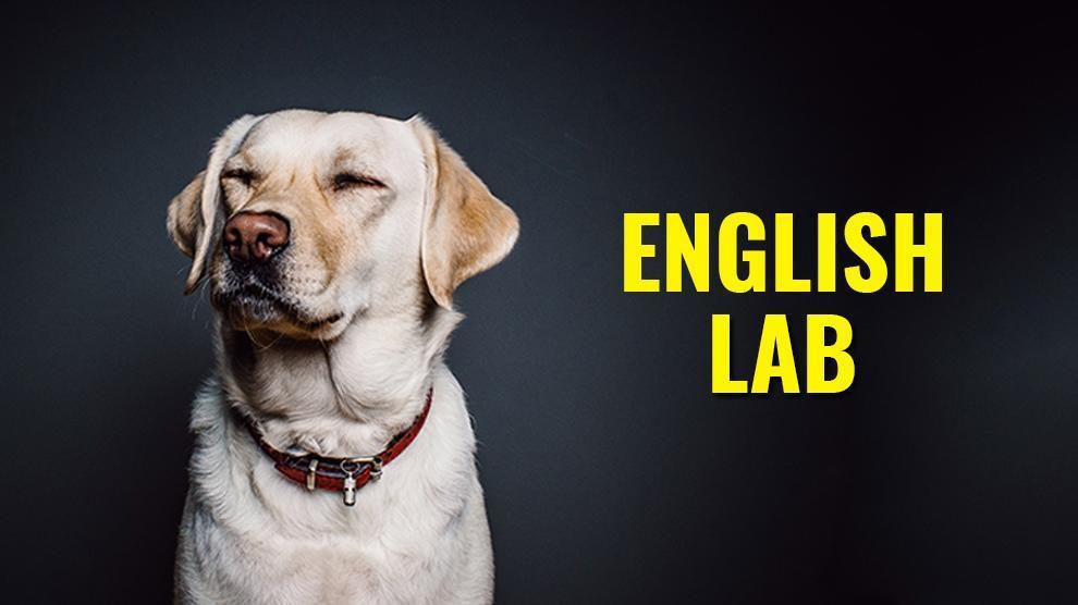 English Vs American Labrador Retriever