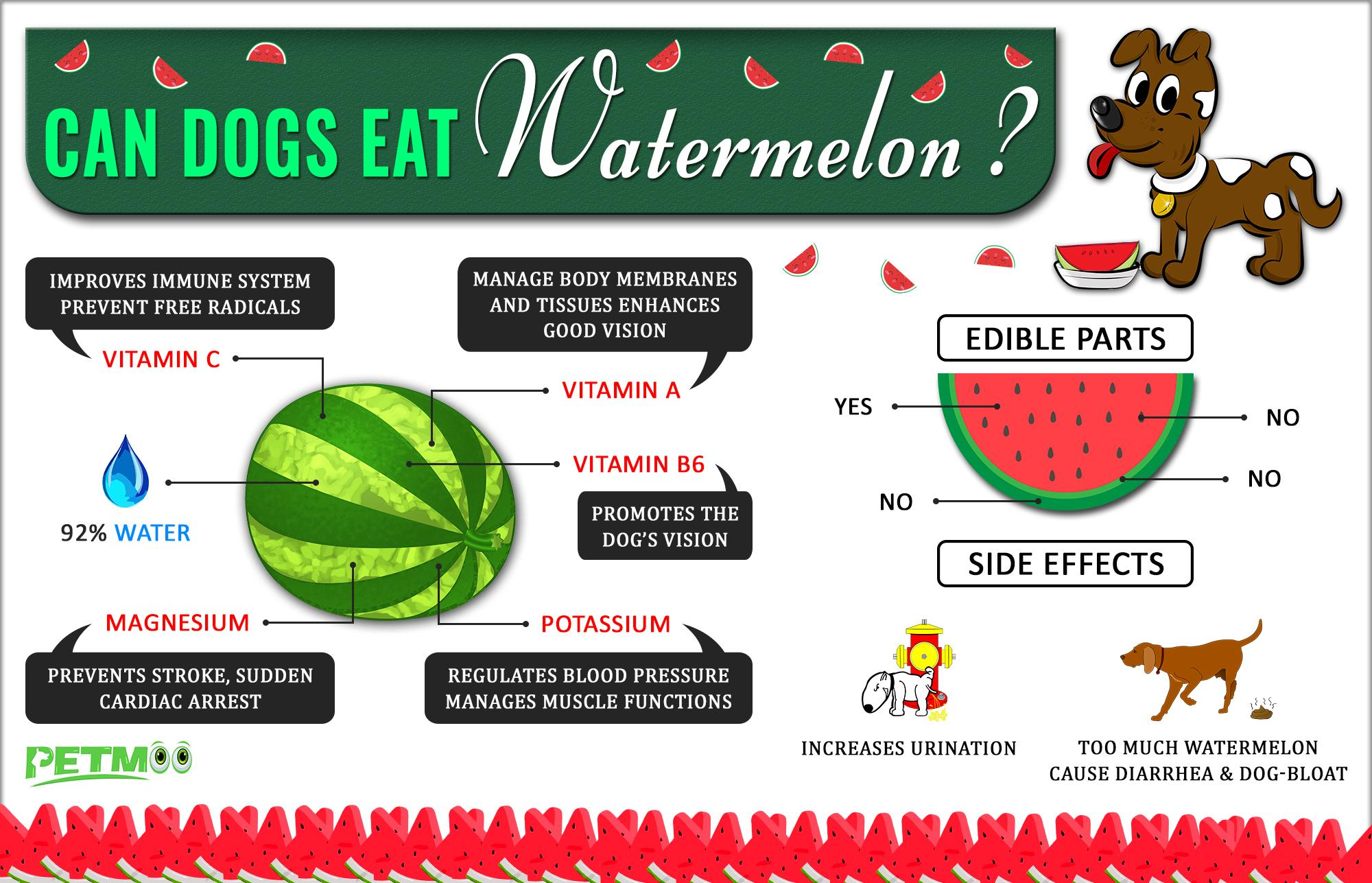 Is watermelon safe For Dogs