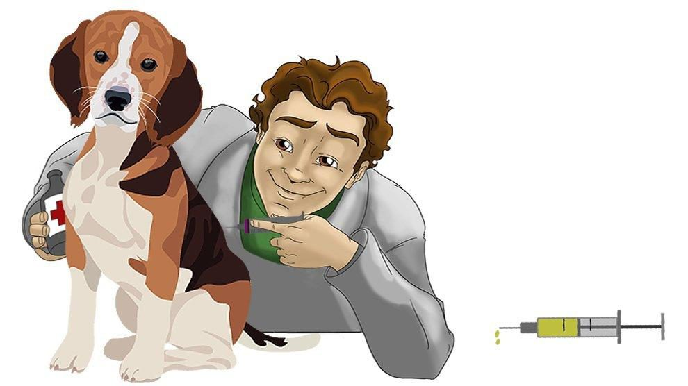 Vaccination In Pets