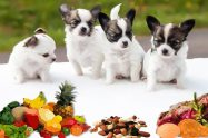 What Foods Can Dogs Eat
