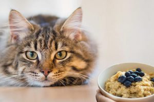 Can Cats Eat Oatmeal