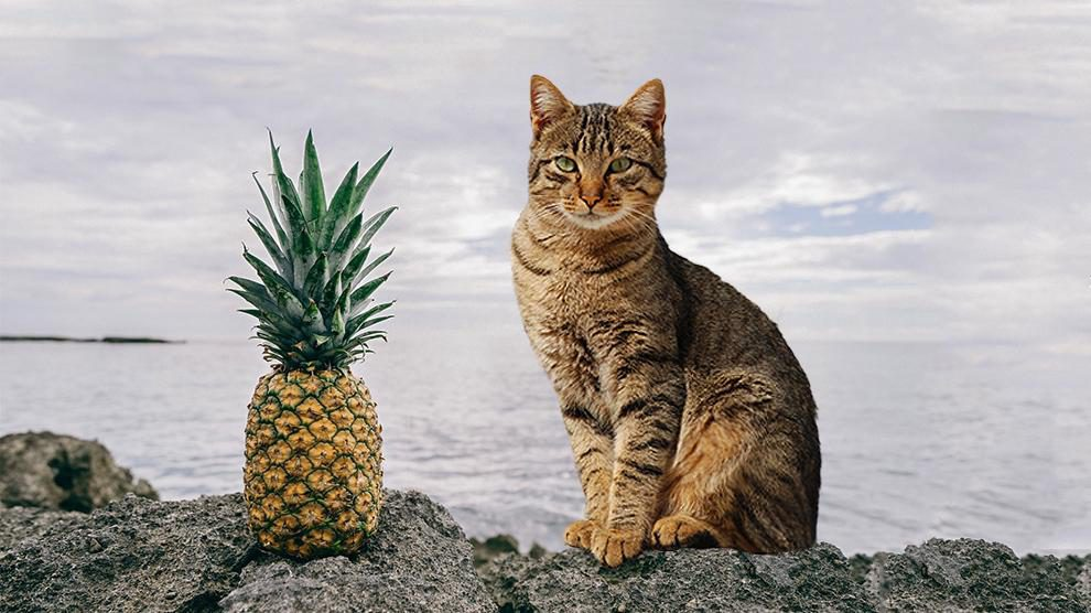 Can Cats Eat Pineapple?