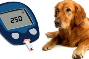 Diabetes In Dogs