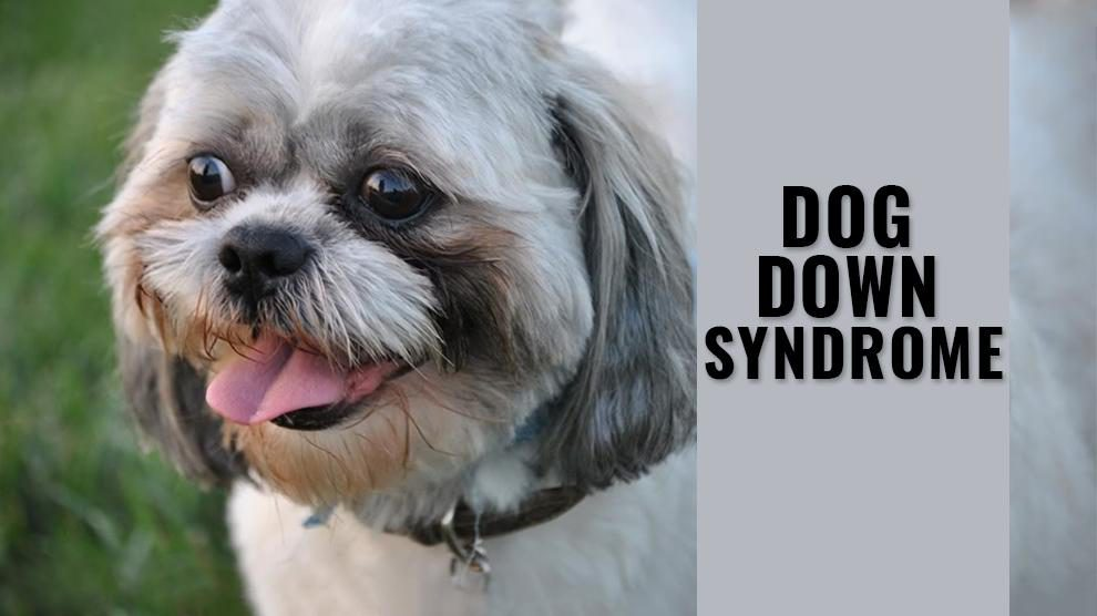 Dog Down Syndrome