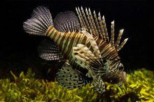 Fish Pets
