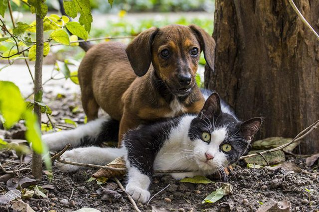 Pets Body Language
