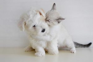 Best Dog Breeds For Cats