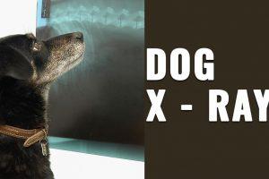 Dog X ray
