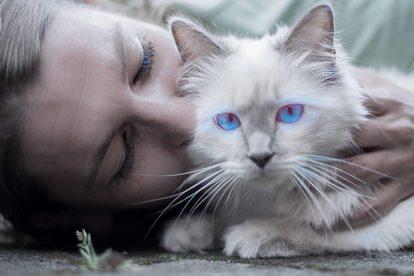 Basic cat care