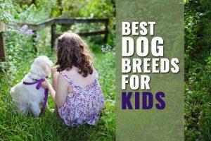 Best Dog Breeds For kids