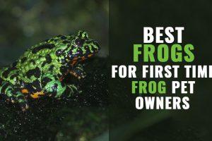 Pet Frogs