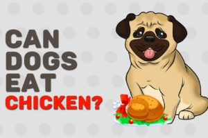 Can Dogs Eat Chicken?
