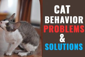 Cat Behavior Problems & Solutions
