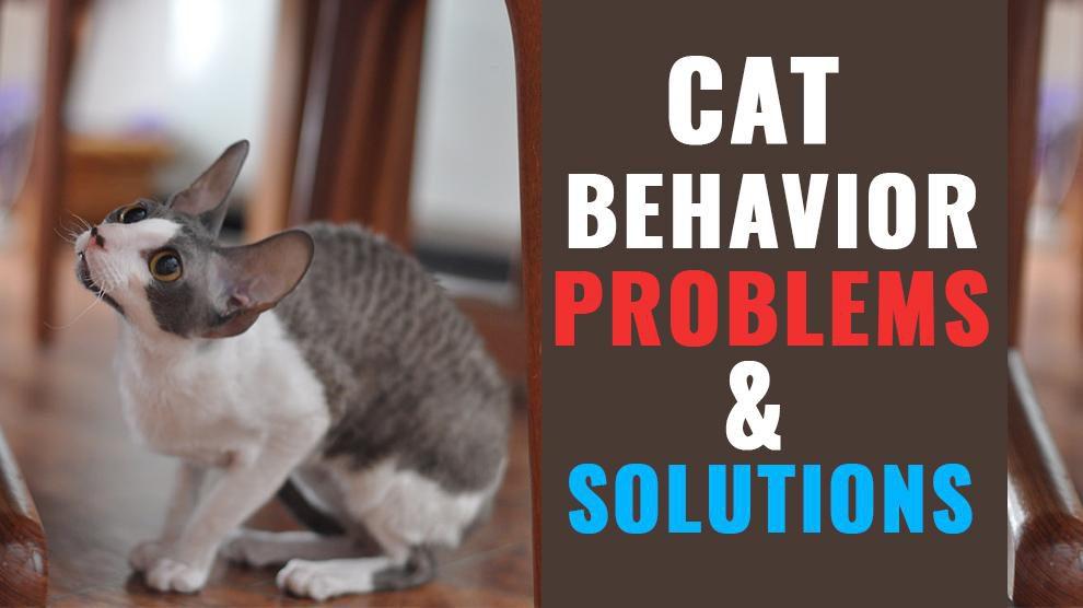 Cat Behavior Problems & Solutions