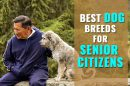 Dog Breeds for Older Adults
