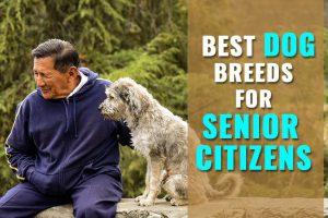 Dog Breeds for Older Adults
