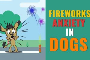 Fireworks Anxiety In Dogs