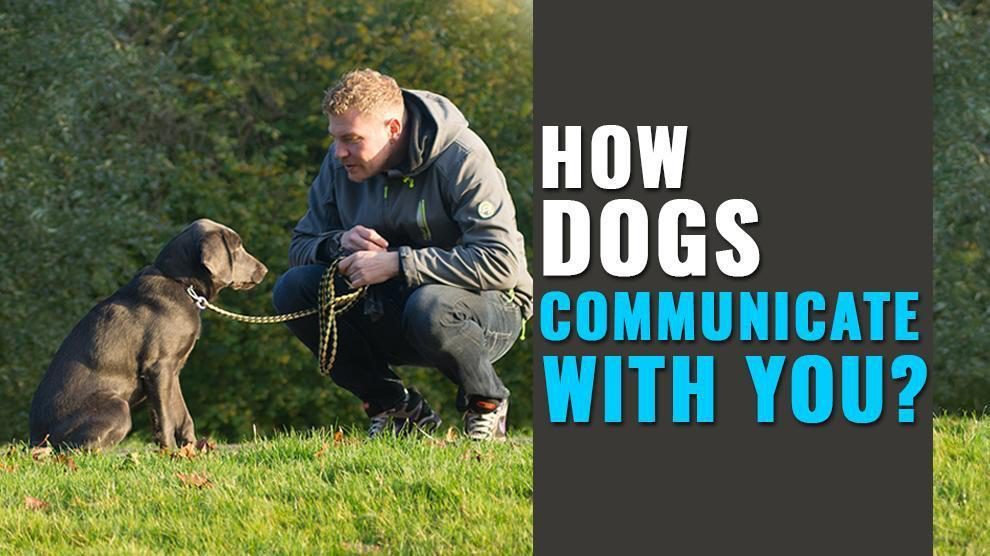 How Dogs Communicate With Humans