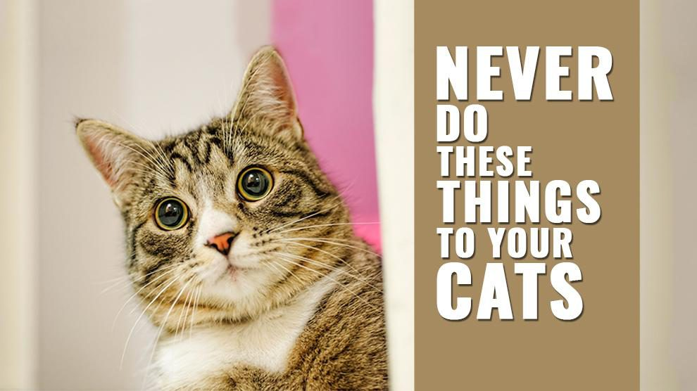 Things You Should Never Do To Your Cat