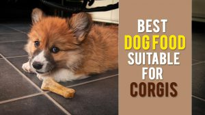 Best Dog Food For Corgis