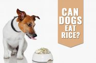 Can Dogs Eat Rice?