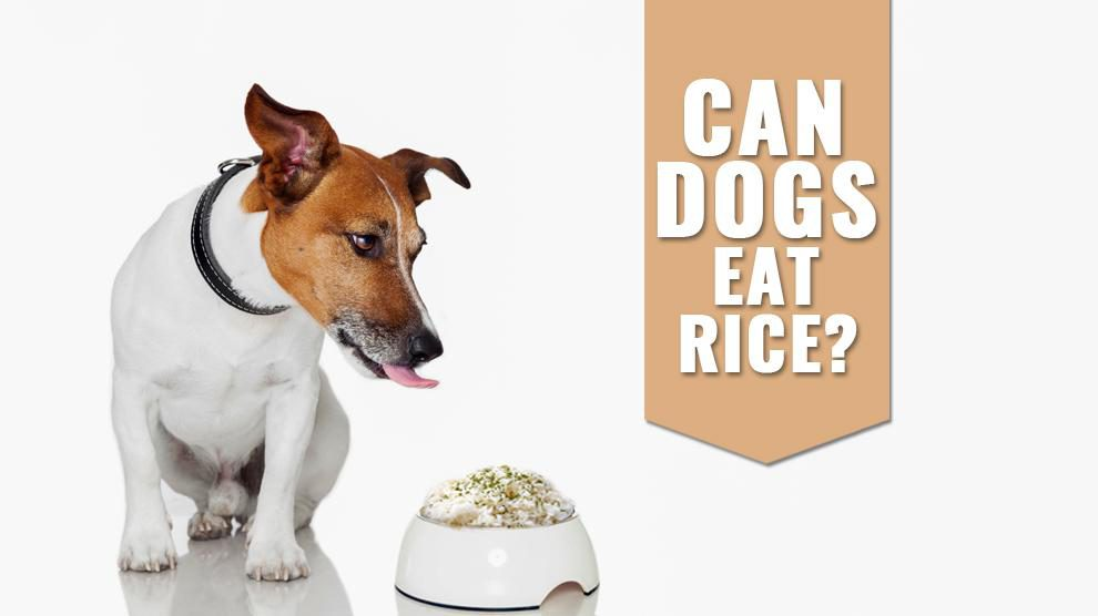 Can Dogs Eat Rice? Is Brown Rice Good