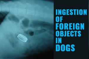 Dog Intestinal Blockage