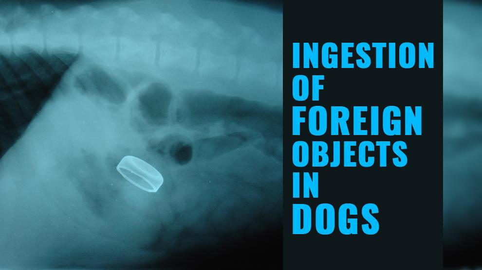 Dog Intestinal Blockage