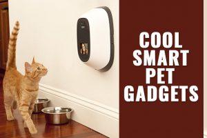 Pet Gadgets