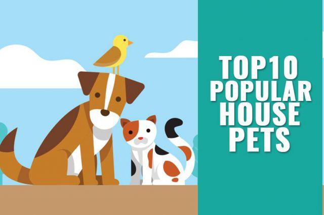 Popular House Pets
