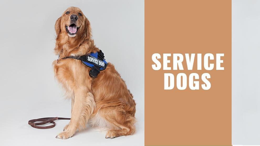 Service Dogs Types Requirements And