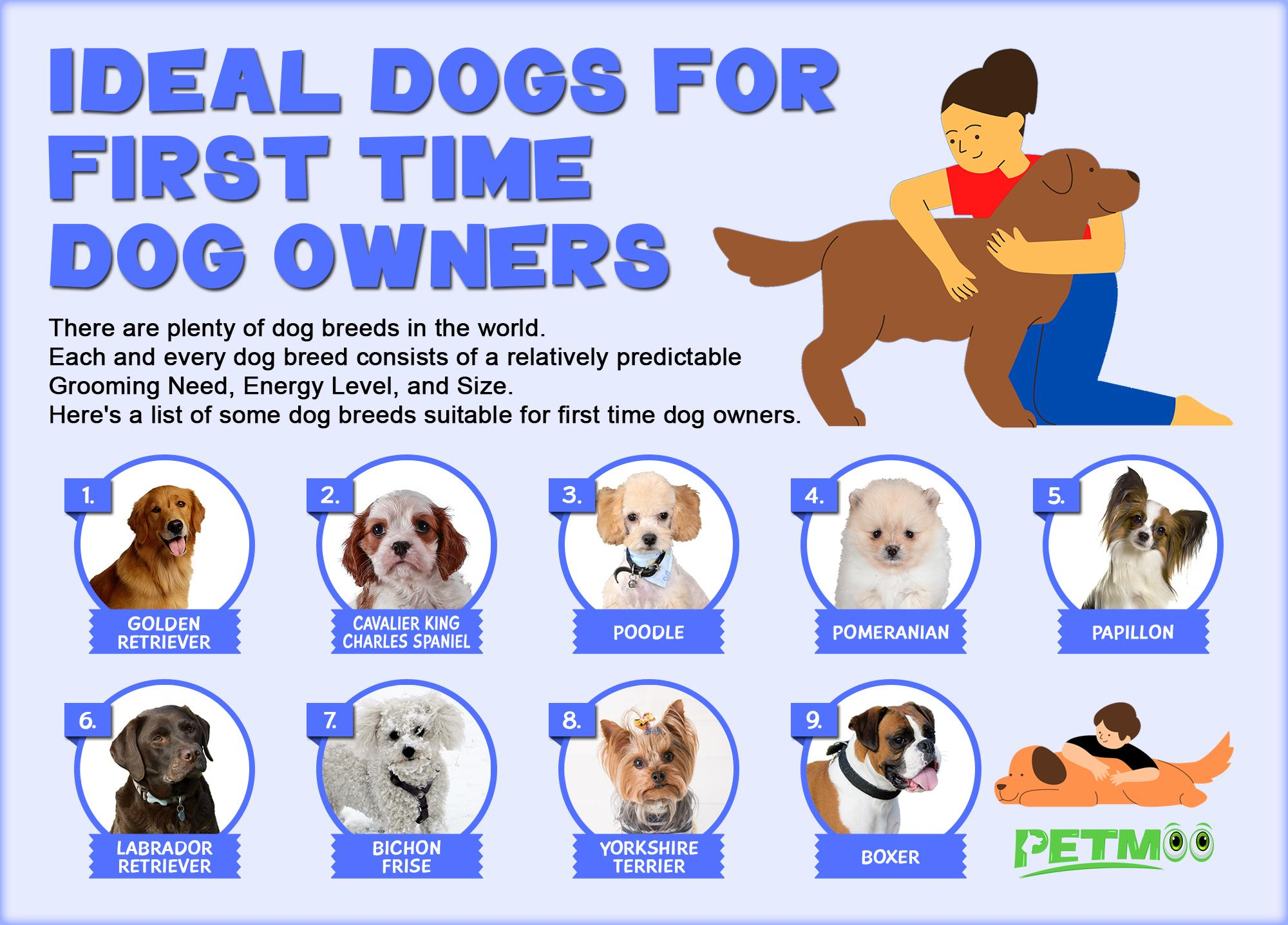 Ideal Dogs For First Time Dog Owners Infographics
