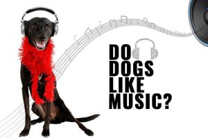 Do-Pets-Love-Bob-Marley-Songs
