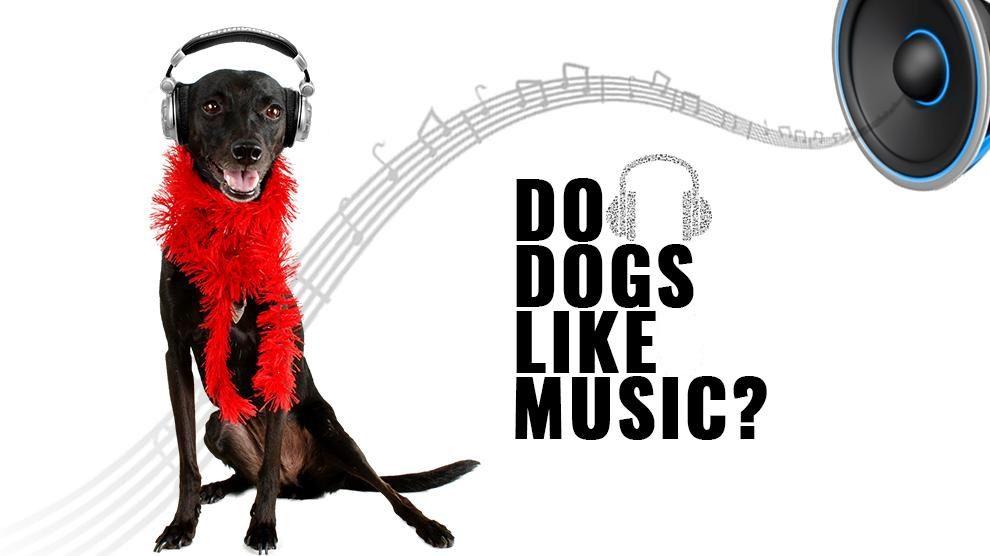 Do-Pets-Love-Bob-Marley-Songs