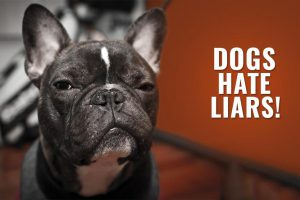 Dogs Hate Liars