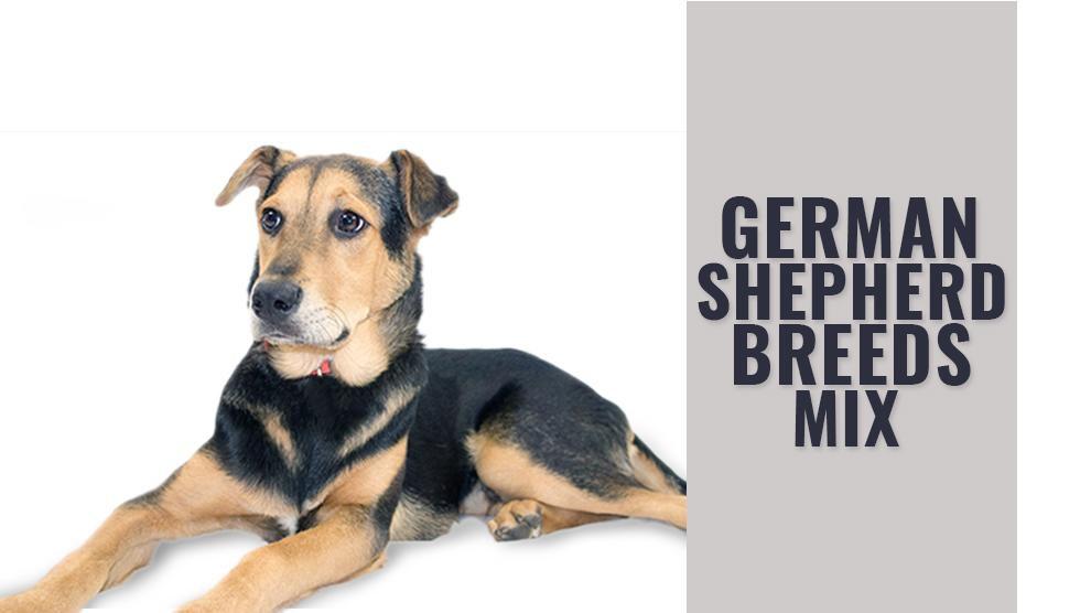 German Shepherd Mix Breeds