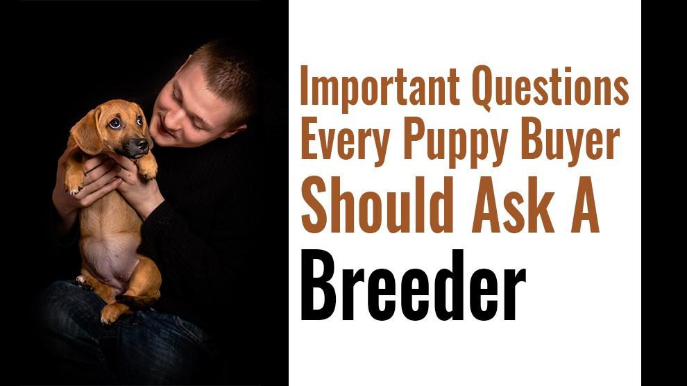 Questions To Ask A Breeder
