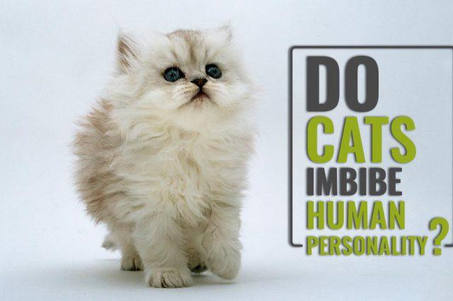 Do Cats Imbibe Human Personality?