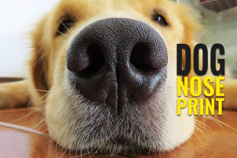 Dog Nose Print