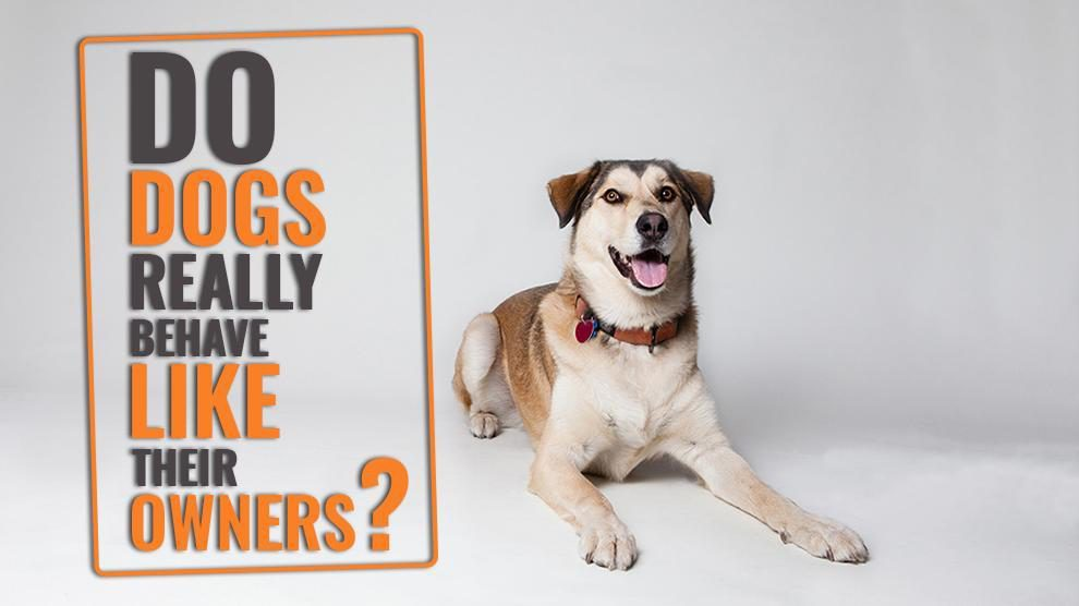Dogs Really Behave Like Their Owners